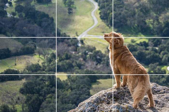 A photo of a dog on a mountain to demonstrate the rule of thirds - via https://expertphotography.com